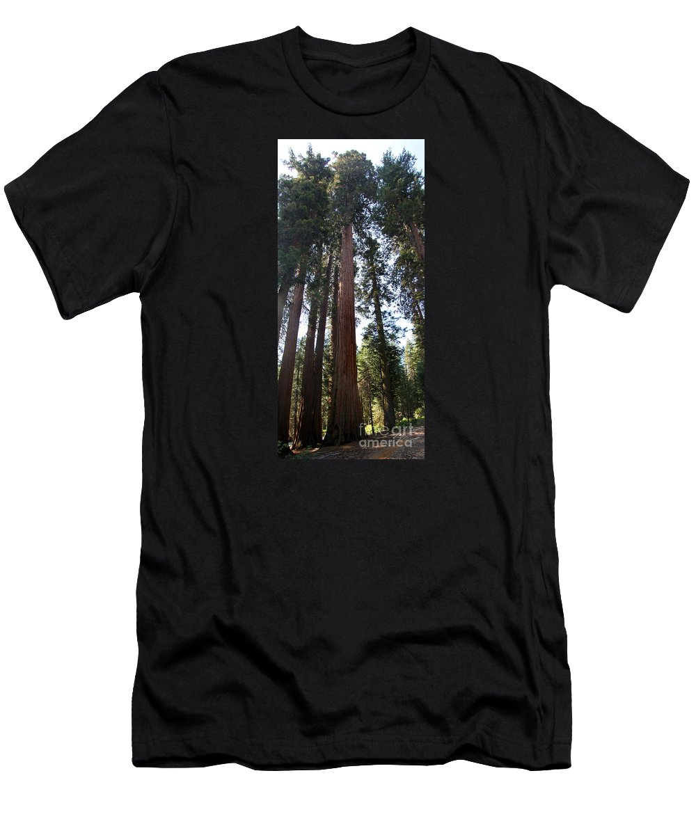 Sequoia Grove Men's T-Shirt (Athletic Fit) featuring the photograph Giant Sequoias - Yosemite Park by Christiane Schulze Art And Photography