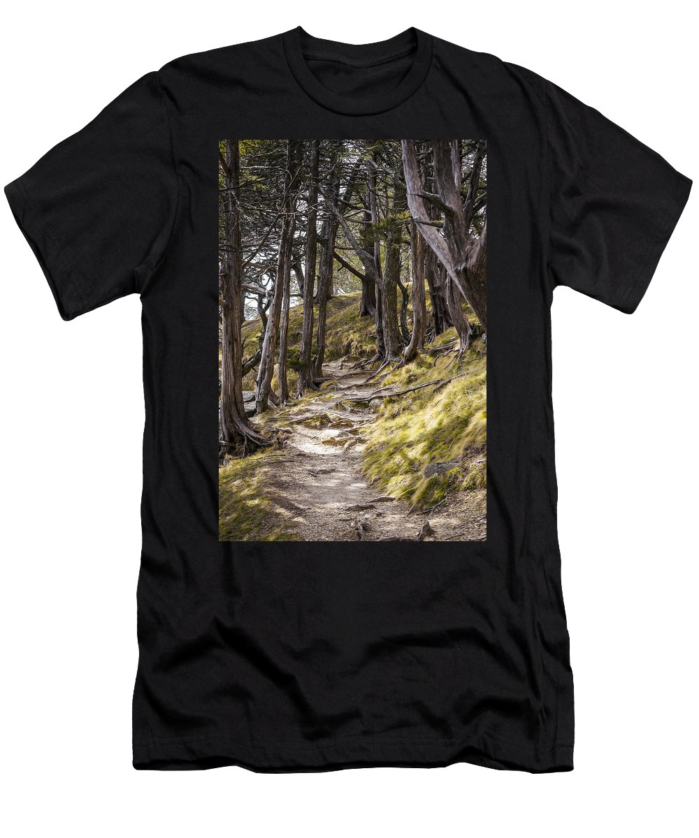 Tree Men's T-Shirt (Athletic Fit) featuring the photograph Gibraltar Rock Trail Wisconsin by Steven Ralser