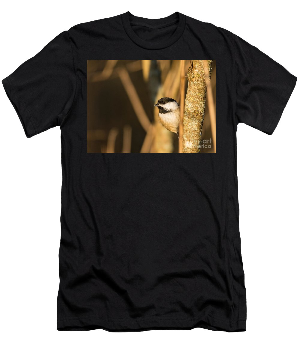 Men's T-Shirt (Athletic Fit) featuring the photograph Golden Chickadee by Cheryl Baxter
