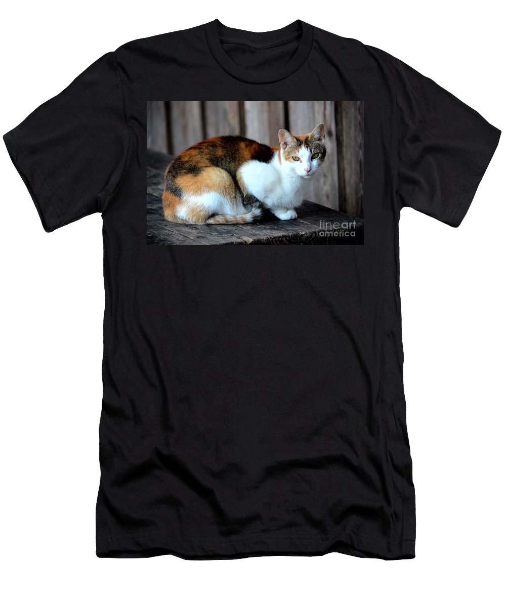 Golden Eyed Ferrel Men's T-Shirt (Athletic Fit) featuring the photograph Golden Eyed Ferrel by Maria Urso
