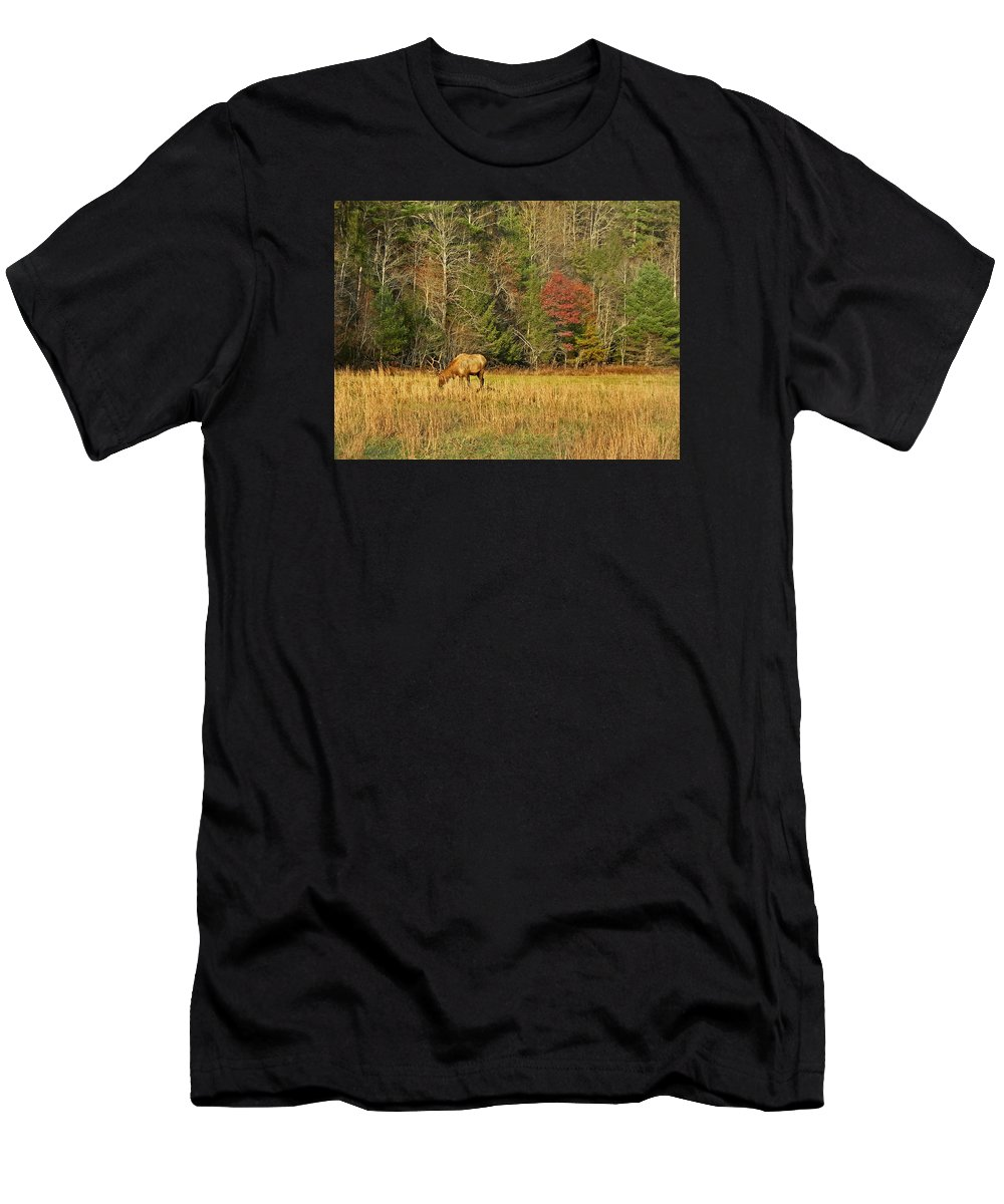 Elk Men's T-Shirt (Athletic Fit) featuring the photograph Grazing Elk by Skip Willits