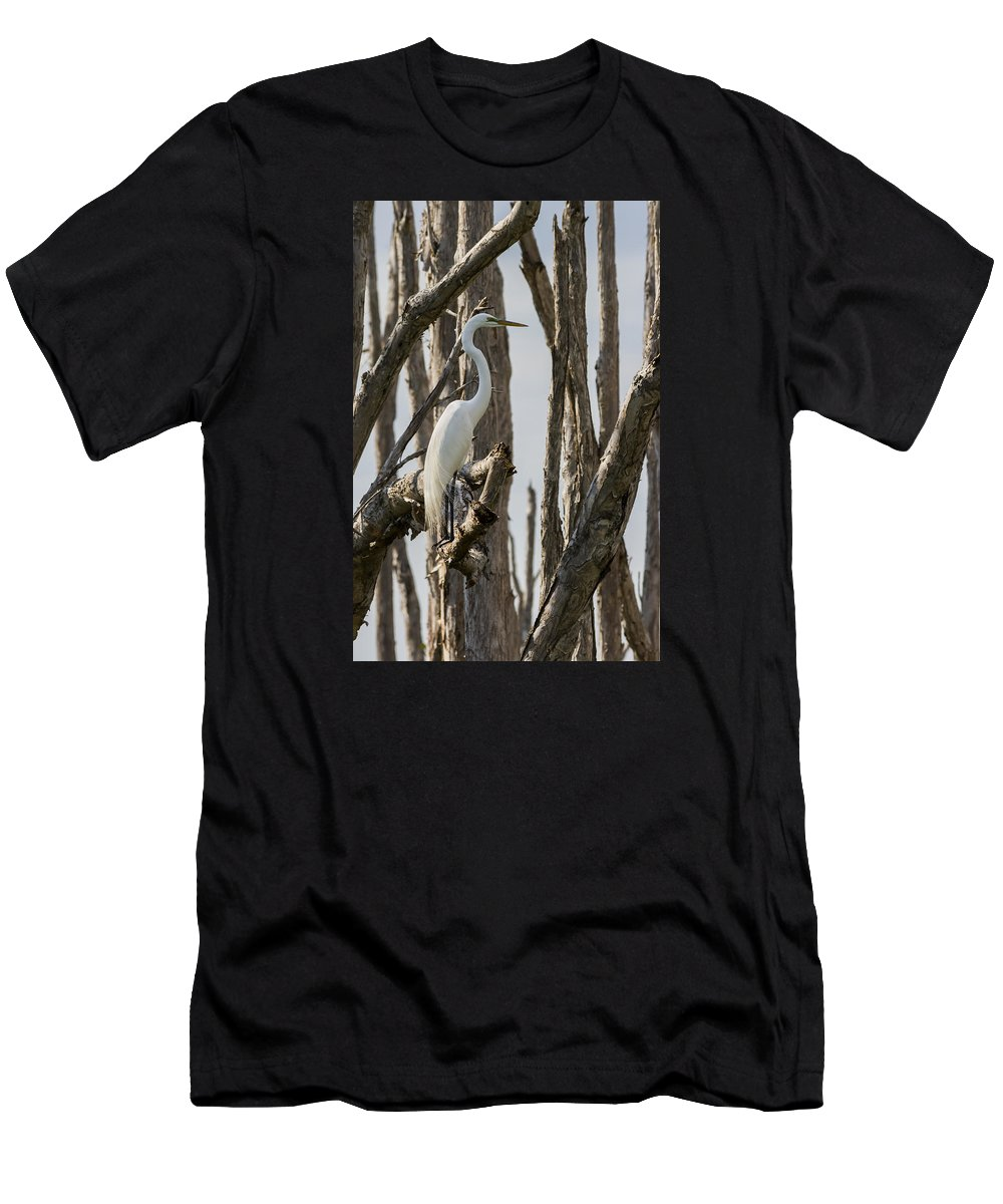 Great Egret Men's T-Shirt (Athletic Fit) featuring the photograph Great Egret by Ed Gleichman