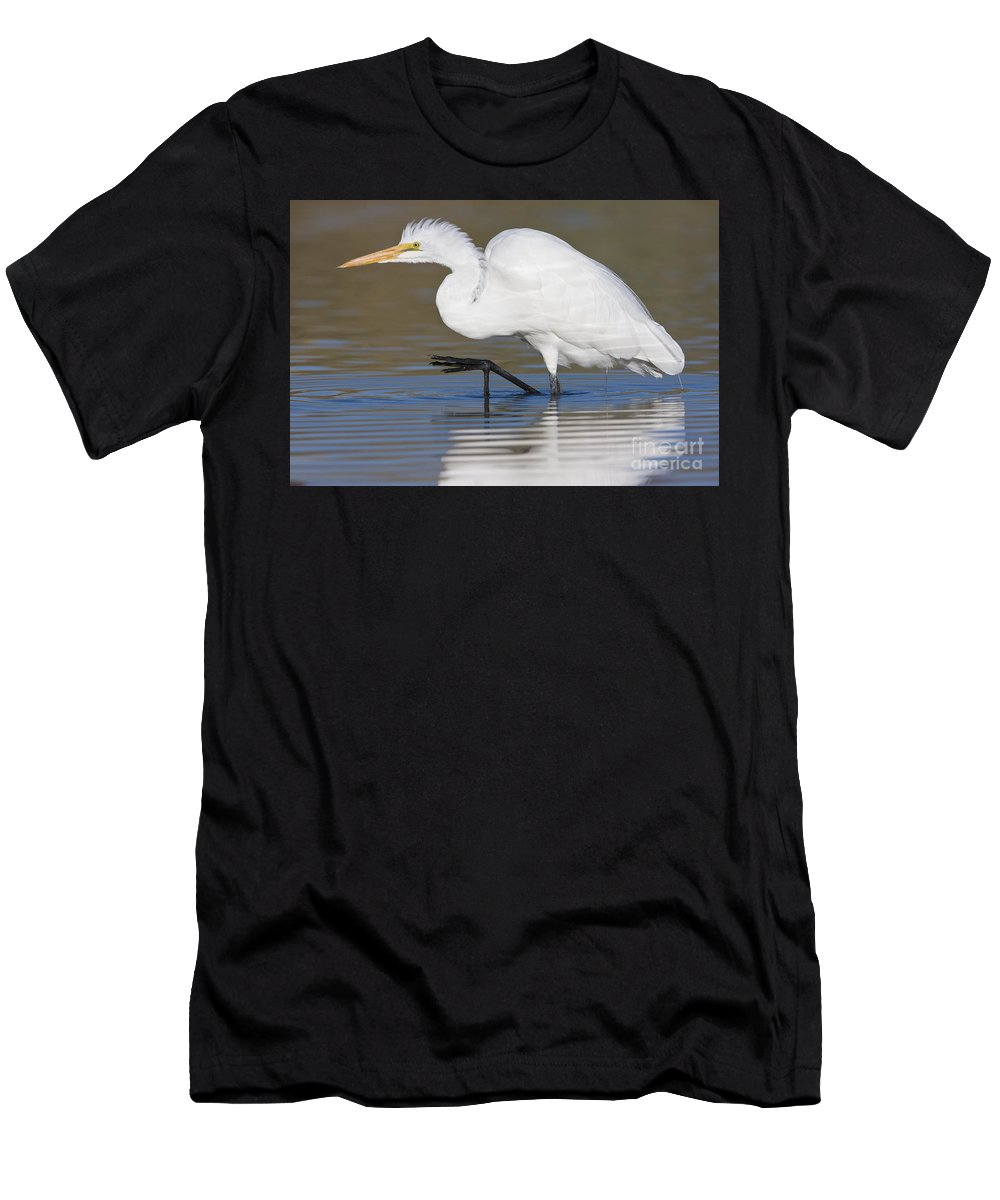 Great Egret Men's T-Shirt (Athletic Fit) featuring the photograph Great Egret With Leg Up by Bryan Keil