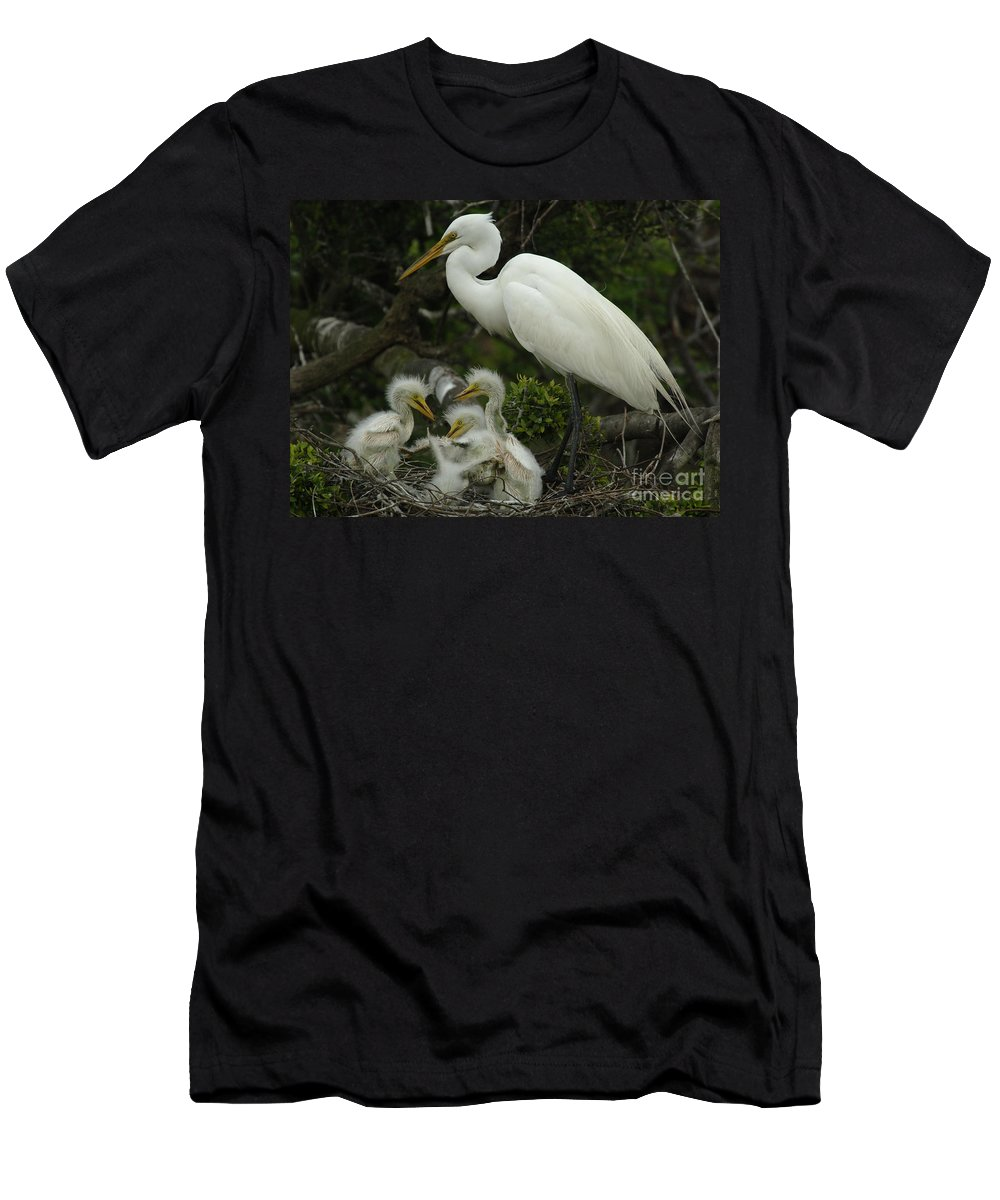 Great Egret Family Men's T-Shirt (Athletic Fit) featuring the photograph Great Egret With Young by Bob Christopher