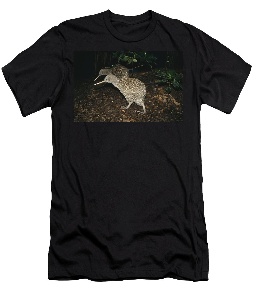 Feb0514 Men's T-Shirt (Athletic Fit) featuring the photograph Great Spotted Kiwi Breeding Pair New by Tui De Roy