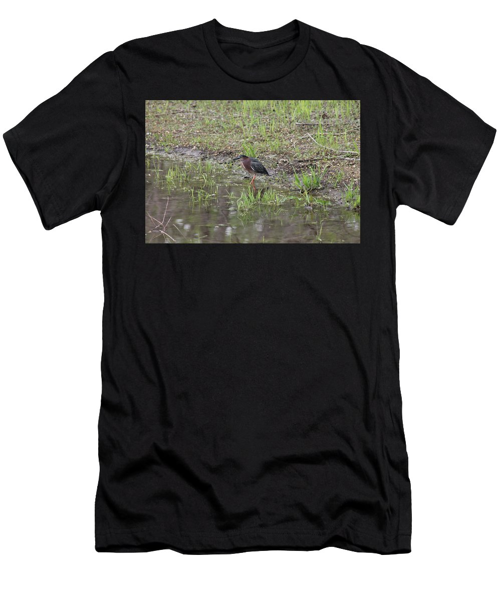 Green Heron Men's T-Shirt (Athletic Fit) featuring the photograph Green Heron Along Shore by Wayne Williams