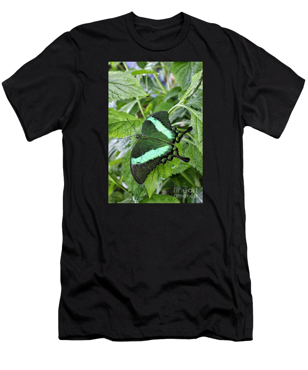 \green Wing Butterfly\ Men's T-Shirt (Athletic Fit) featuring the photograph Green Wings 2 by Shari Nees