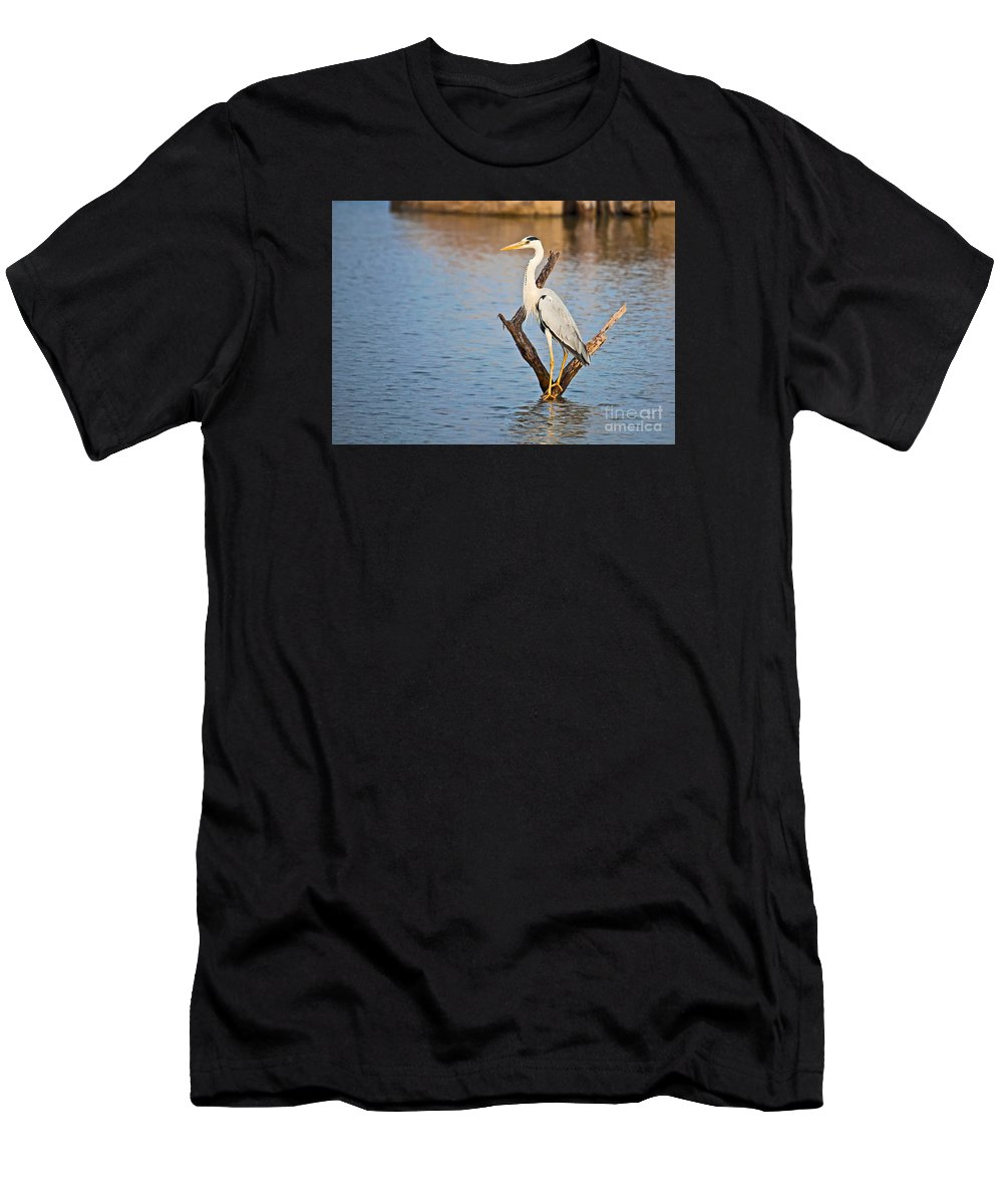 Grey Heron Men's T-Shirt (Athletic Fit) featuring the photograph Grey Heron Ardea Cinerea by Liz Leyden