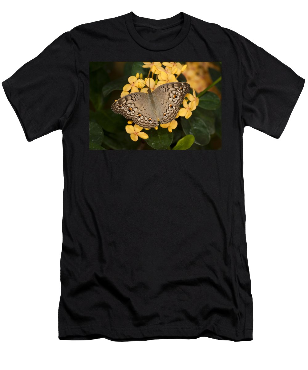 Feb0514 Men's T-Shirt (Athletic Fit) featuring the photograph Grey Pansy Butterfly Arizona by Tom Vezo