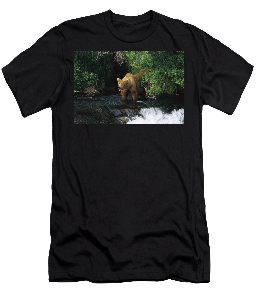 Feb0514 Men's T-Shirt (Athletic Fit) featuring the photograph Grizzly Bear Fishing Brooks River Falls by Konrad Wothe