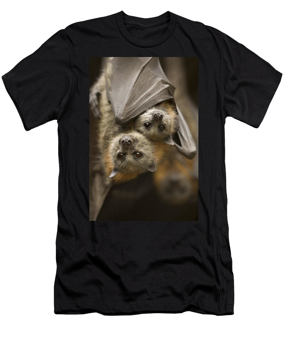 Bats Men's T-Shirt (Athletic Fit) featuring the photograph Hang In There by Mike Dawson