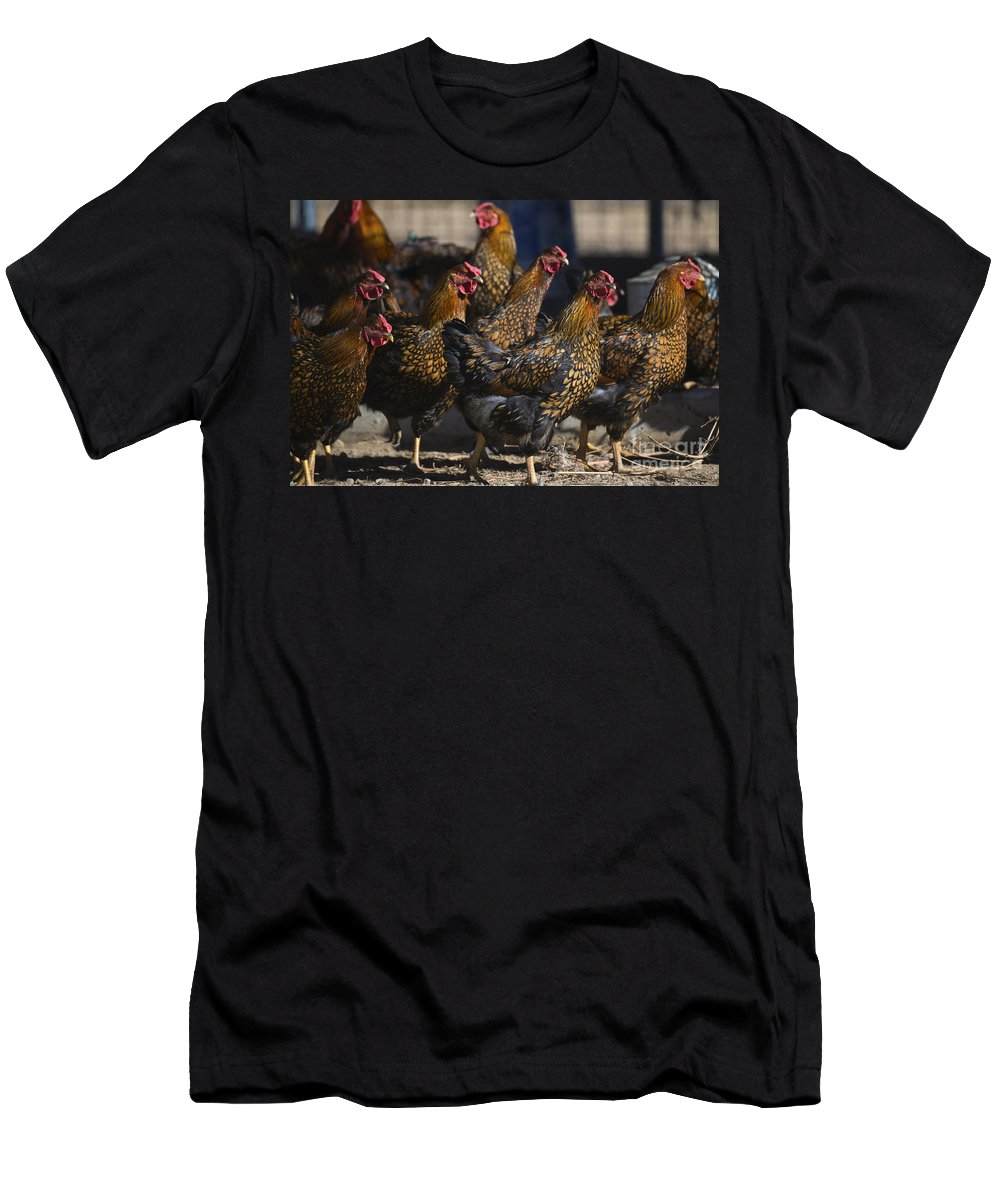 Chickens Men's T-Shirt (Athletic Fit) featuring the photograph Hens Of Distinction by Dianne Phelps