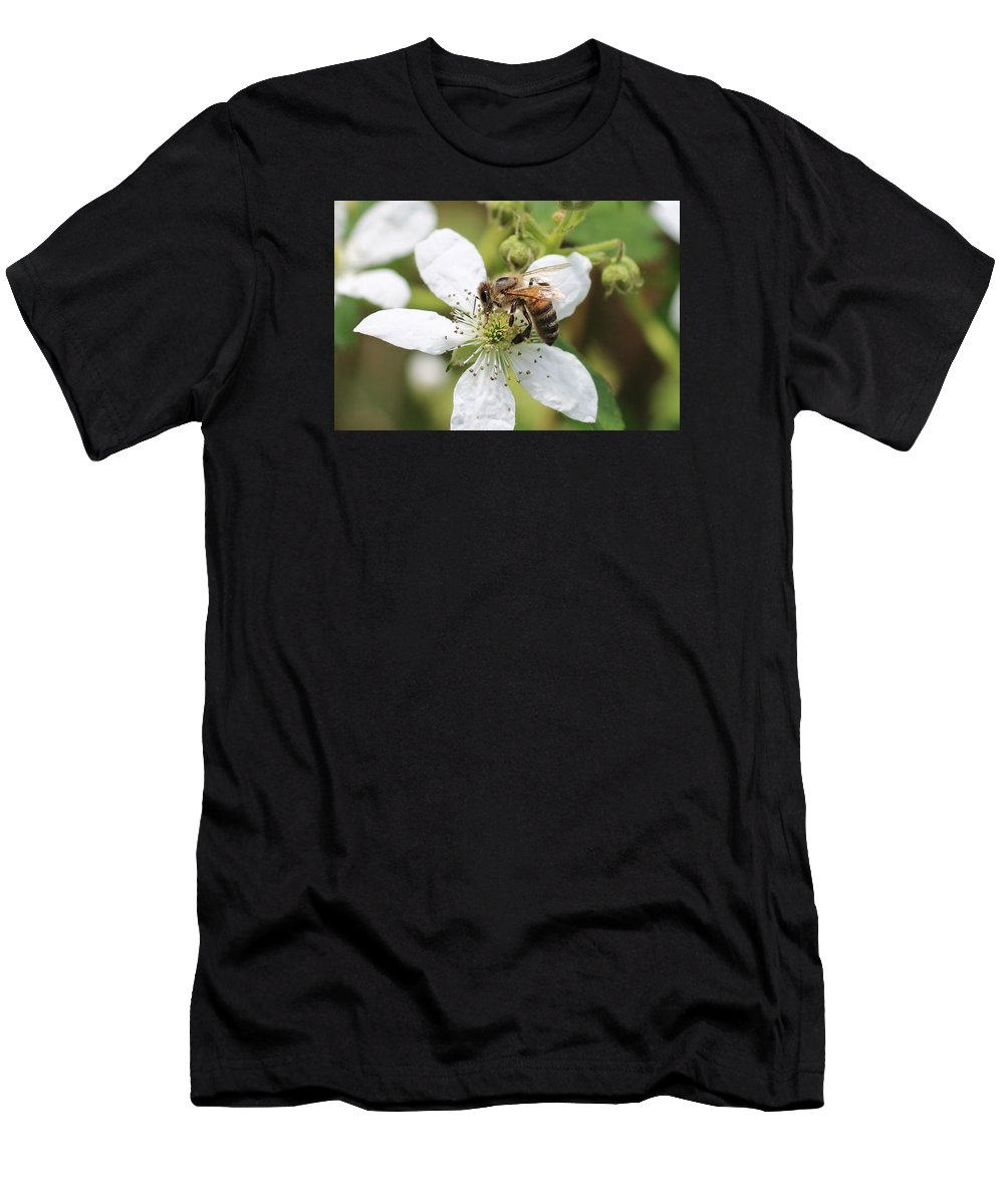 Honeybee Men's T-Shirt (Athletic Fit) featuring the photograph Honeybee On A Blackberry Blossom by Lucinda VanVleck