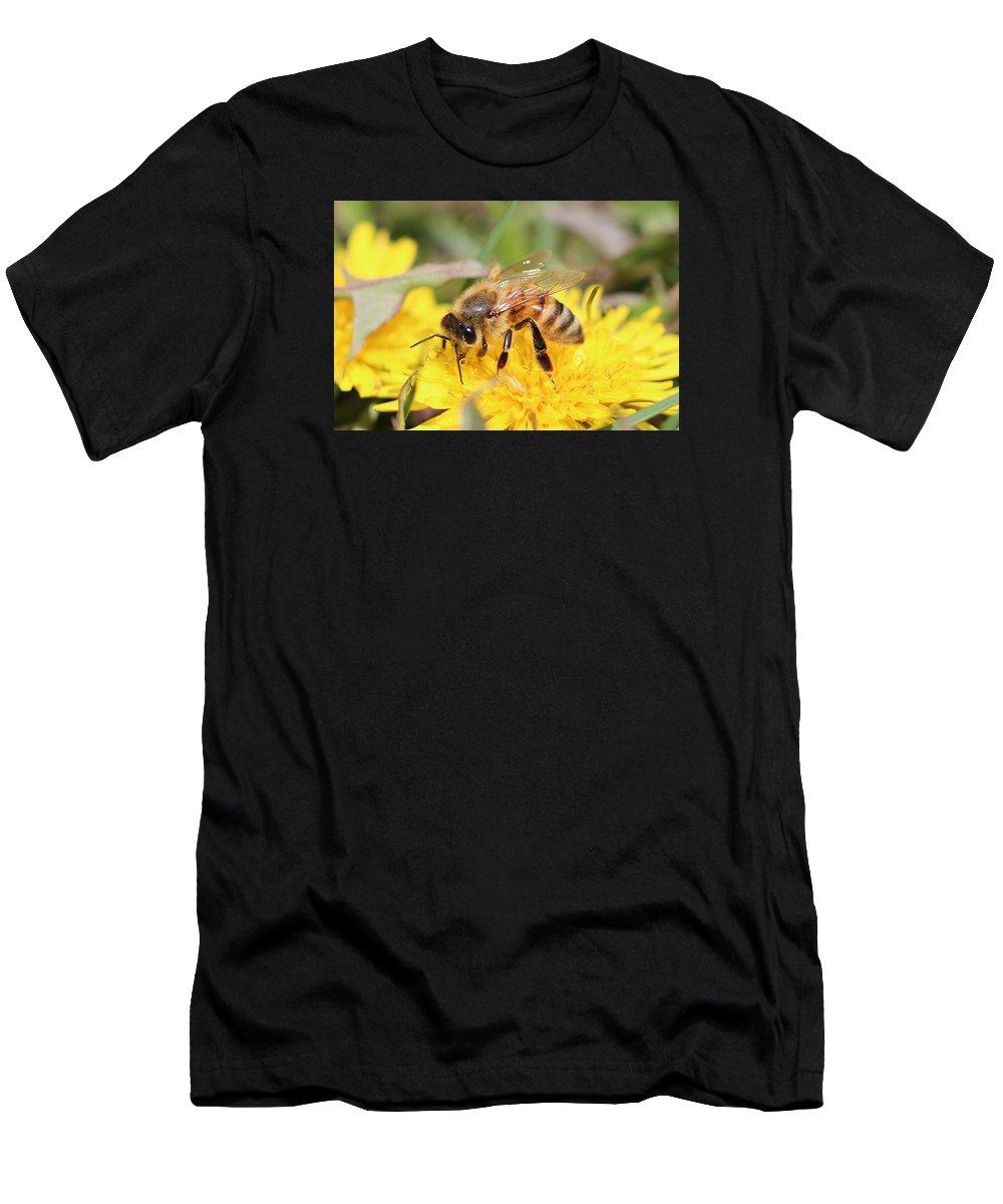 Honeybee Men's T-Shirt (Athletic Fit) featuring the photograph Honeybee On A Dandelion by Lucinda VanVleck