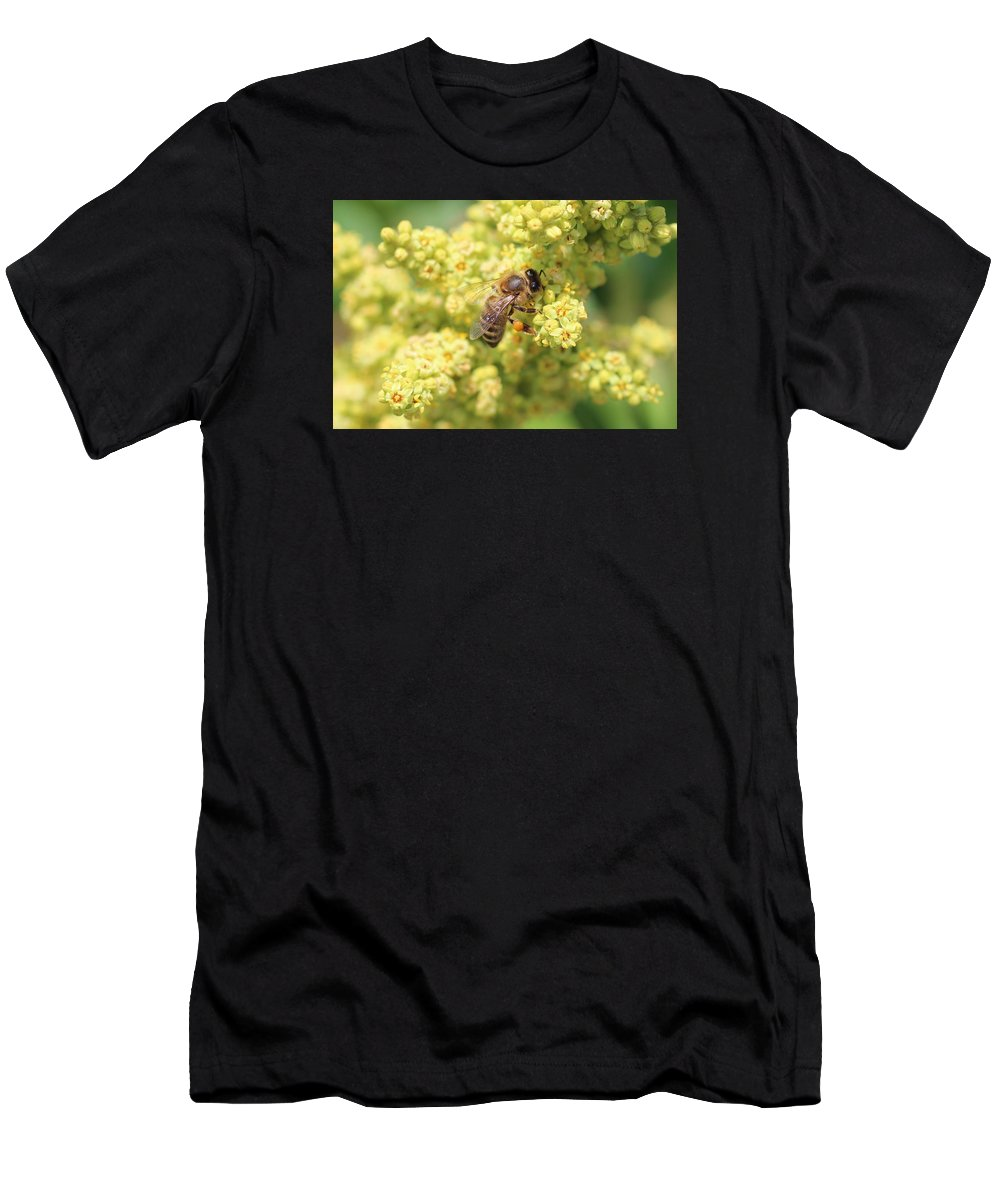 Honeybee Men's T-Shirt (Athletic Fit) featuring the photograph Honeybee On Sumac by Lucinda VanVleck