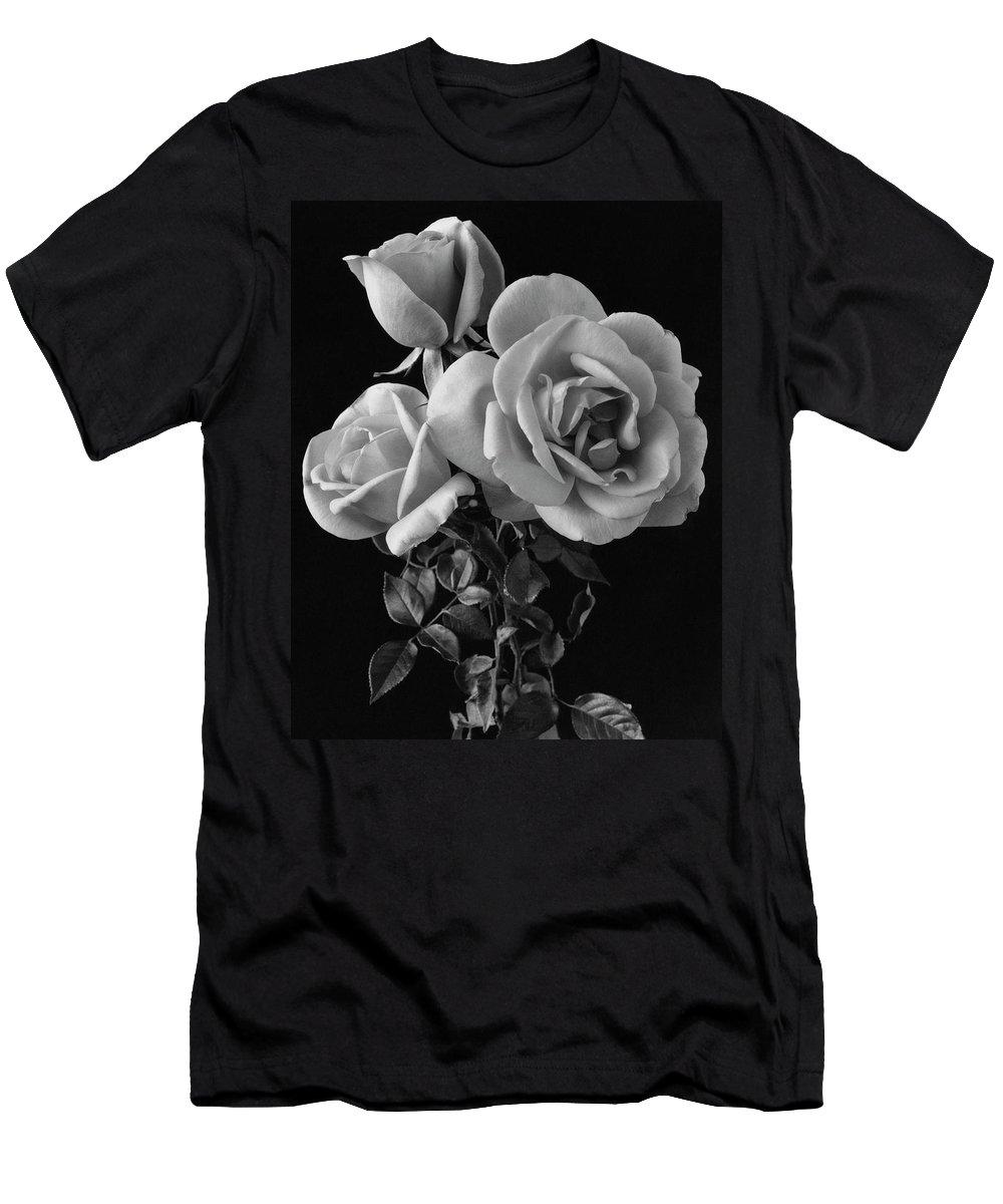 Plants T-Shirt featuring the photograph Hybrid Tea California Roses by Edwin T. Merchant