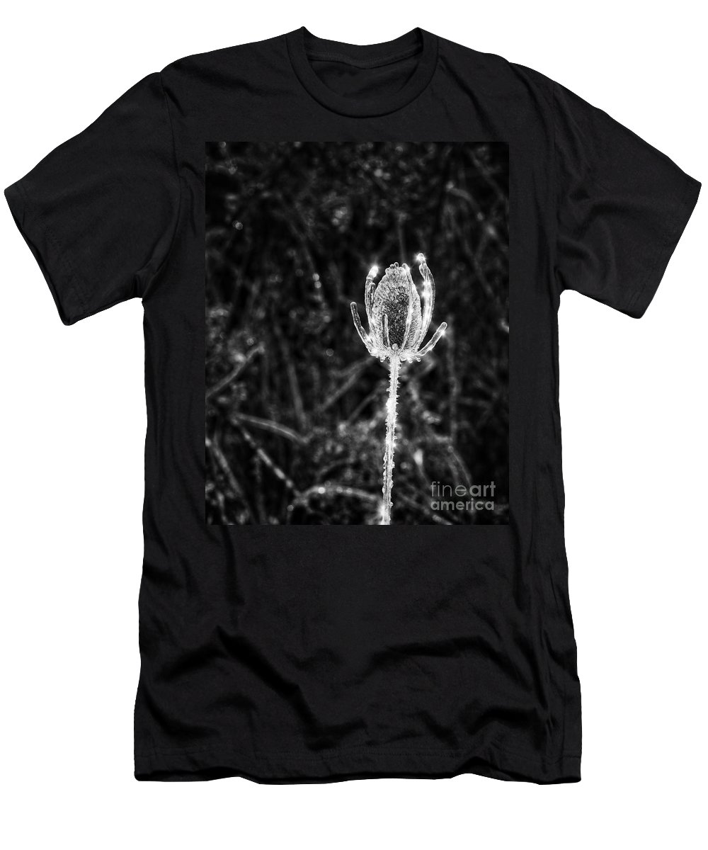 Thistle Men's T-Shirt (Athletic Fit) featuring the photograph Icy Thistle In Monochrome by Les Palenik