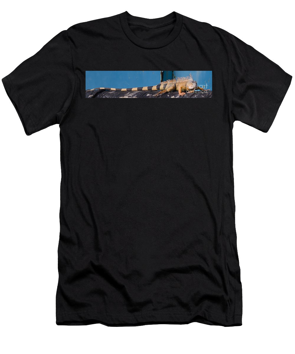 7 Mile Bridge Men's T-Shirt (Athletic Fit) featuring the photograph Iguana by Tracy Knauer
