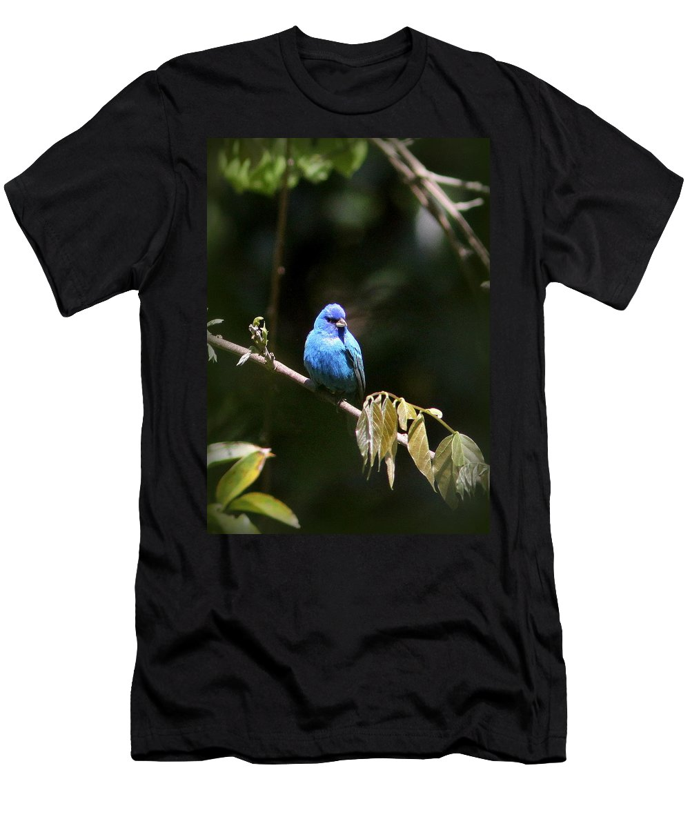 Indigo Bunting Men's T-Shirt (Athletic Fit) featuring the photograph Indigo Bunting - Img-428-003 by Travis Truelove