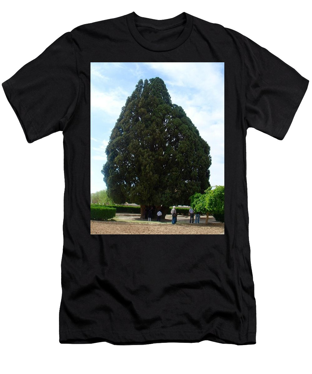 Oldest Tree Men's T-Shirt (Athletic Fit) featuring the photograph Iran Yazd Cedar Tree by Lois Ivancin Tavaf