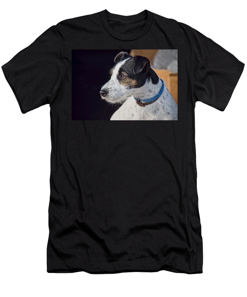 Jack-russell Men's T-Shirt (Athletic Fit) featuring the photograph Jack Russell Terrier by Susie Peek