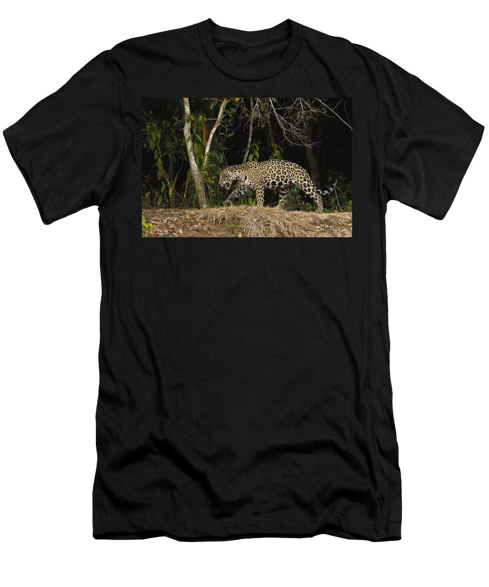 Feb0514 Men's T-Shirt (Athletic Fit) featuring the photograph Jaguar Cuiaba River Brazil by Pete Oxford