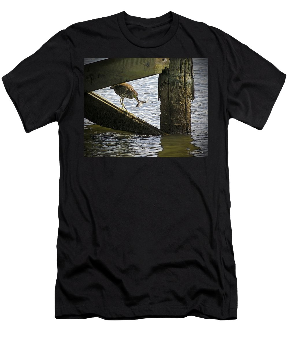 2d Men's T-Shirt (Athletic Fit) featuring the photograph Juvenile Black Crowned Night Heron by Brian Wallace