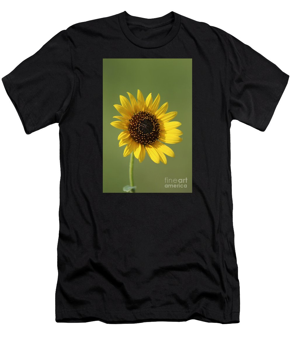 Sunflower Men's T-Shirt (Athletic Fit) featuring the photograph Kansas Wildsunflower With Green Background by Robert D Brozek