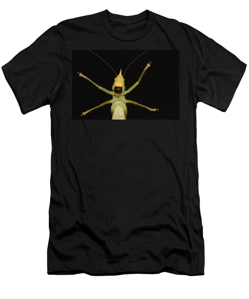 Feb0514 Men's T-Shirt (Athletic Fit) featuring the photograph Katydid Underside Ecuador by Pete Oxford