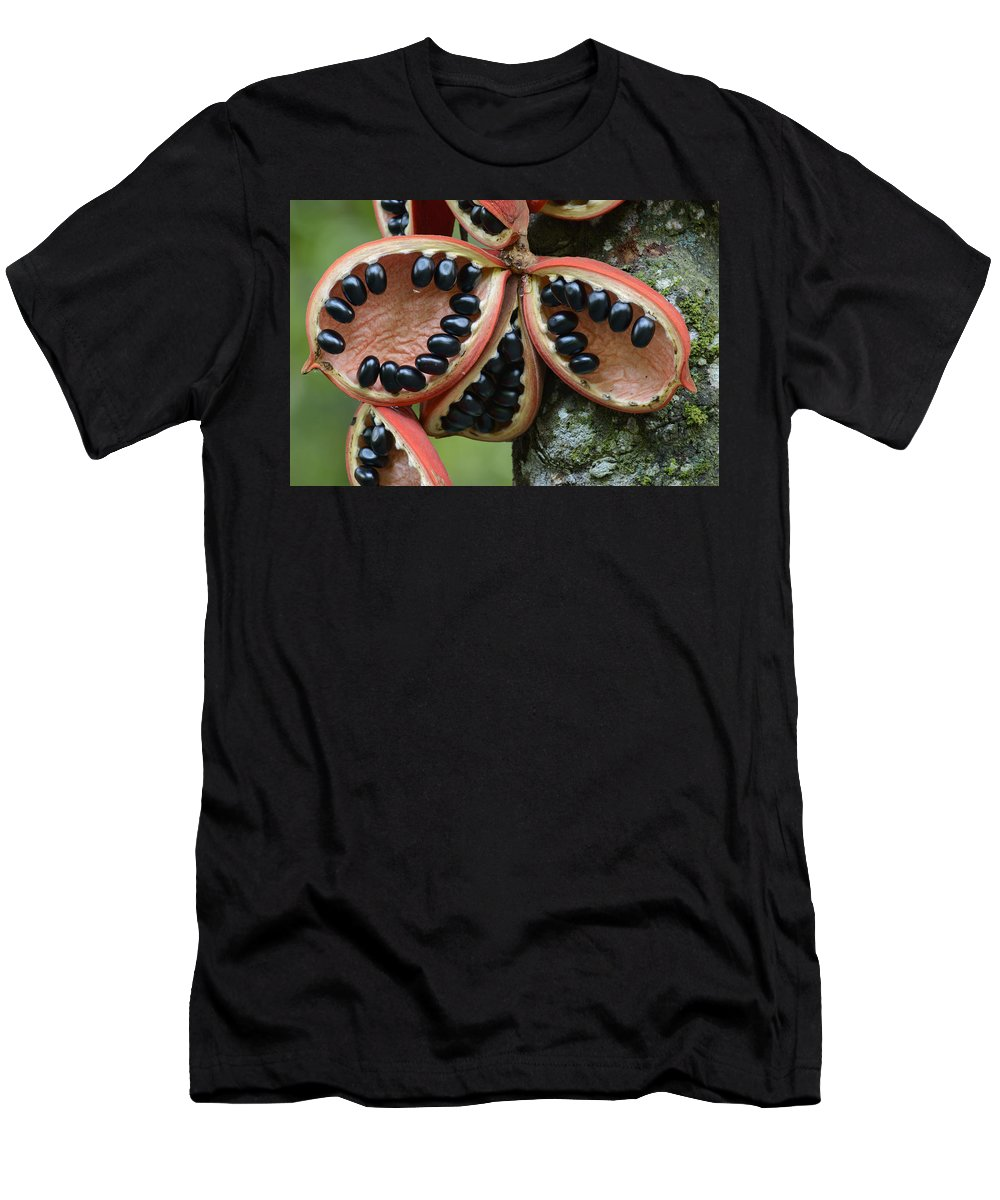 Feb0514 Men's T-Shirt (Athletic Fit) featuring the photograph Kelumpang Sarawak Fruit Seeds Sepilok by Ch'ien Lee