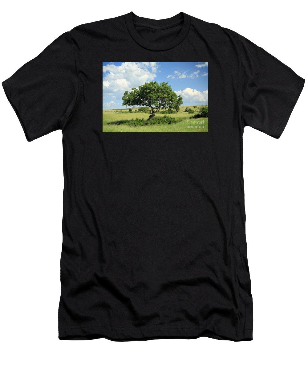 Africa Men's T-Shirt (Athletic Fit) featuring the photograph Kigelia Pinnata Tree by Deborah Benbrook