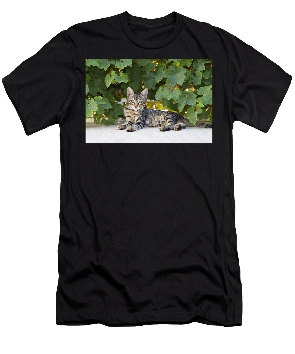 Feb0514 Men's T-Shirt (Athletic Fit) featuring the photograph Kitten In The Garden by Konrad Wothe
