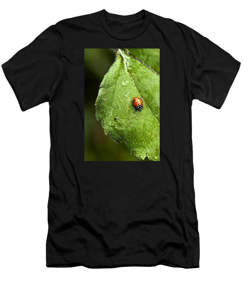 Ladybug Men's T-Shirt (Athletic Fit) featuring the photograph Lady In Red by K D Graves