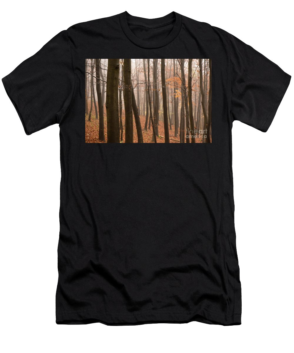 Atmospheric Men's T-Shirt (Athletic Fit) featuring the photograph Late Autumn Beech by Anne Gilbert