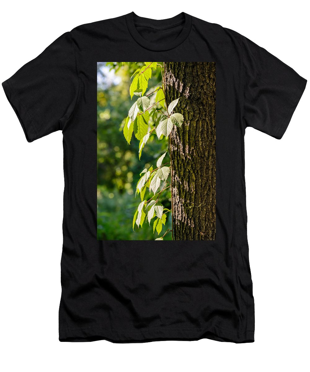 Autumn Men's T-Shirt (Athletic Fit) featuring the photograph Leaves Under The Sun by Alain De Maximy