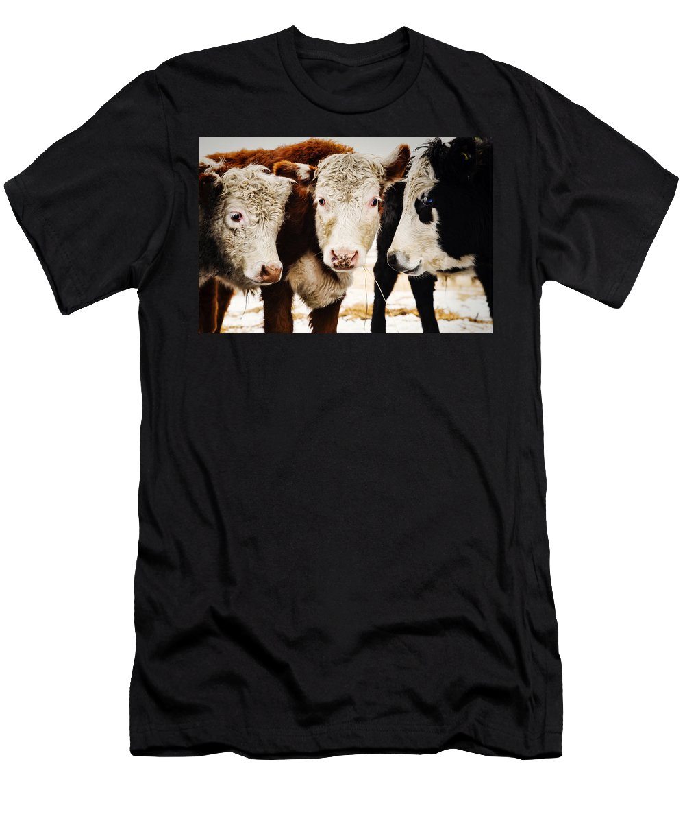 Beef Men's T-Shirt (Athletic Fit) featuring the digital art Let's Talk by Diane Dugas