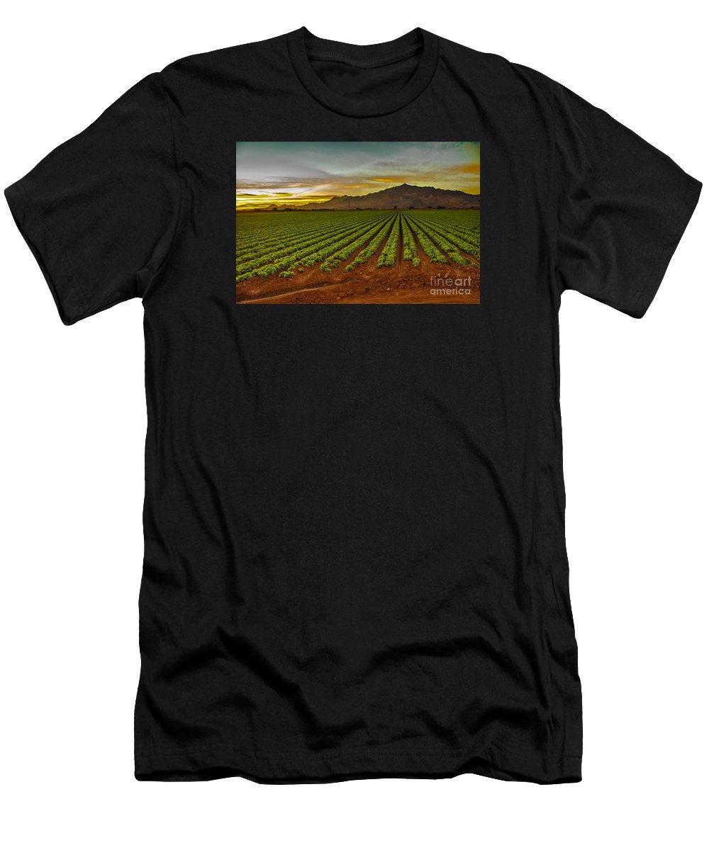 Winter Lettuce Men's T-Shirt (Athletic Fit) featuring the photograph Lettuce Sunrise by Robert Bales