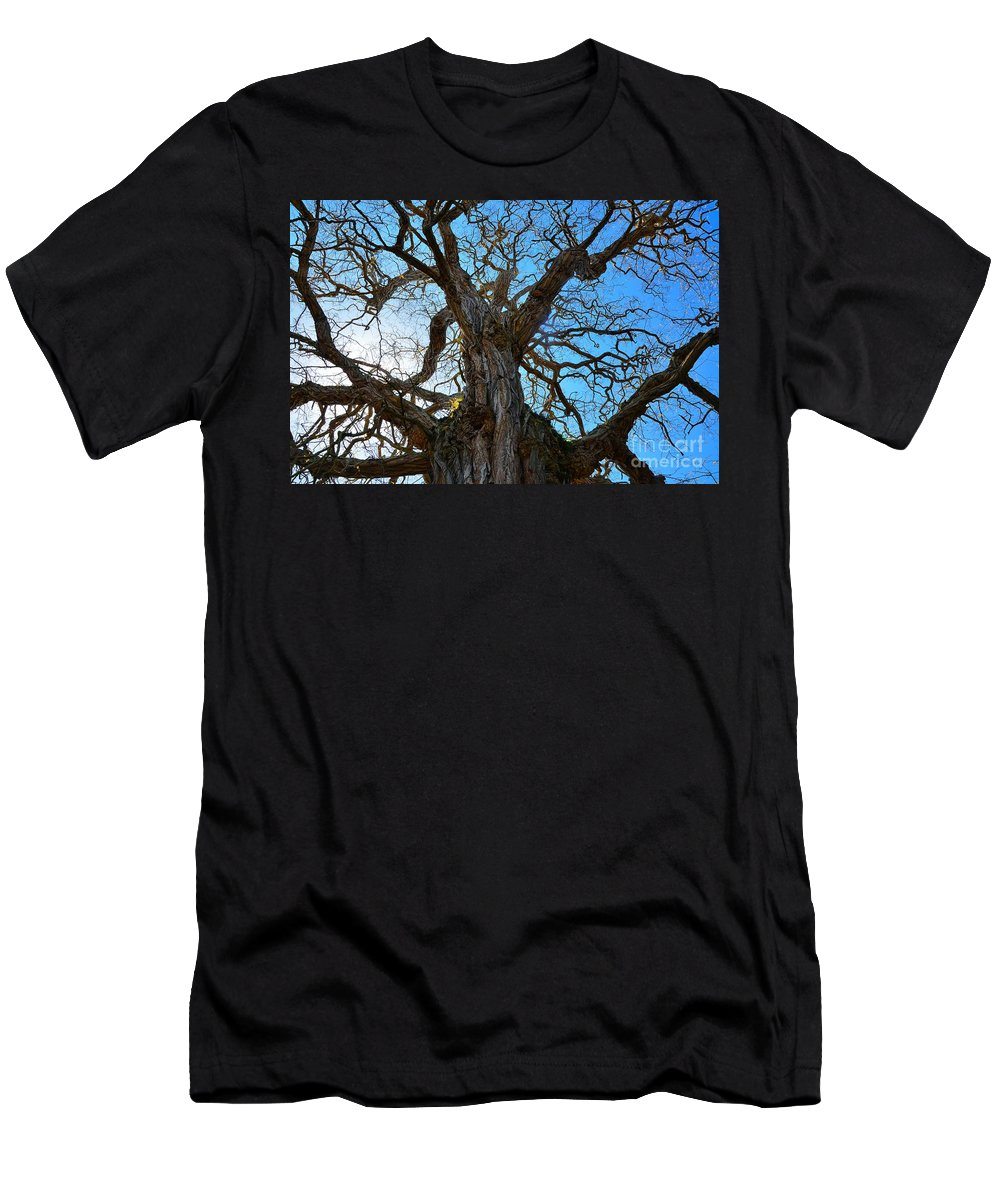 Abstract Men's T-Shirt (Athletic Fit) featuring the photograph Life Of A Tree by Lauren Leigh Hunter Fine Art Photography