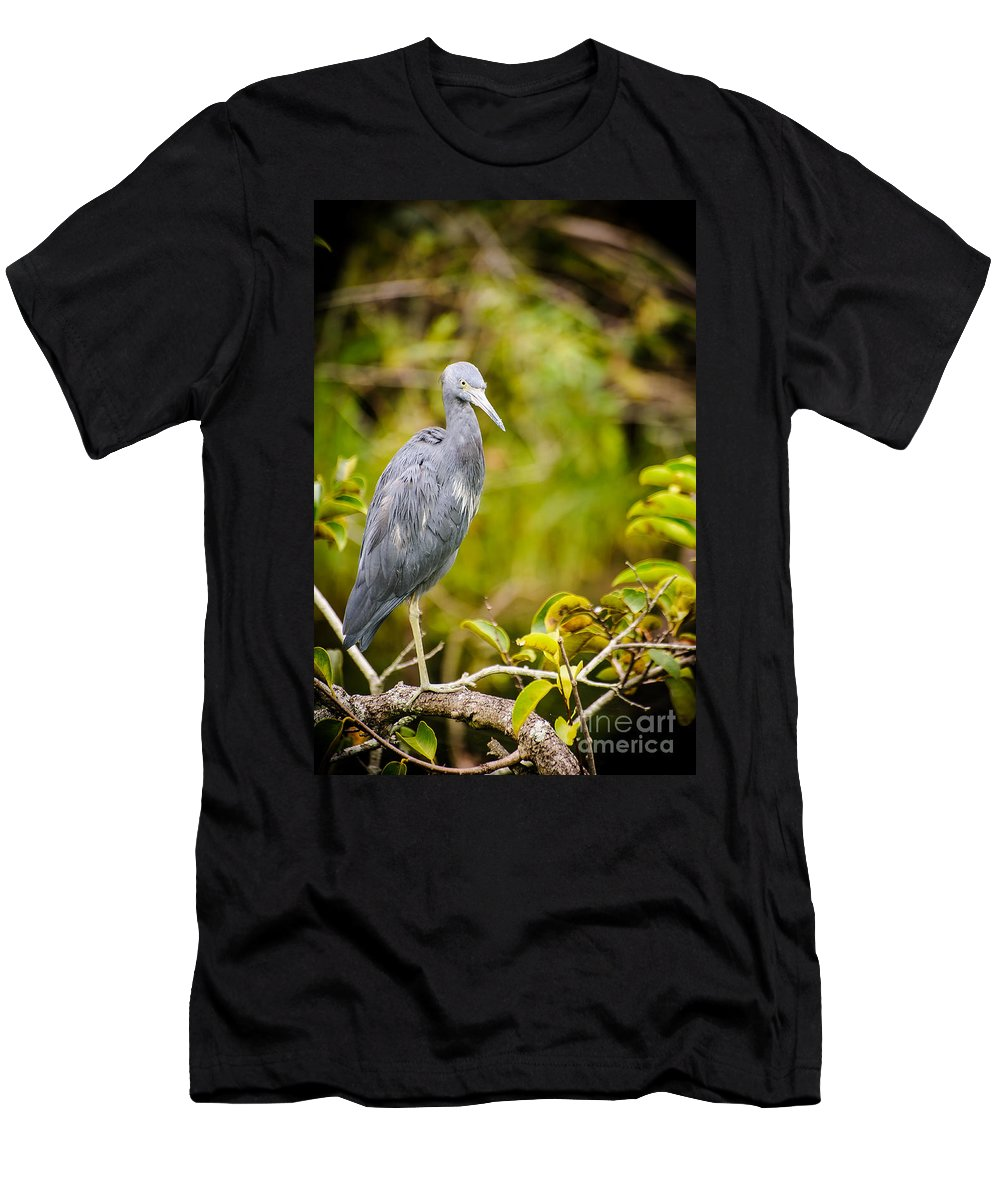 Animal Men's T-Shirt (Athletic Fit) featuring the photograph Little Blue Heron by Charles Dobbs