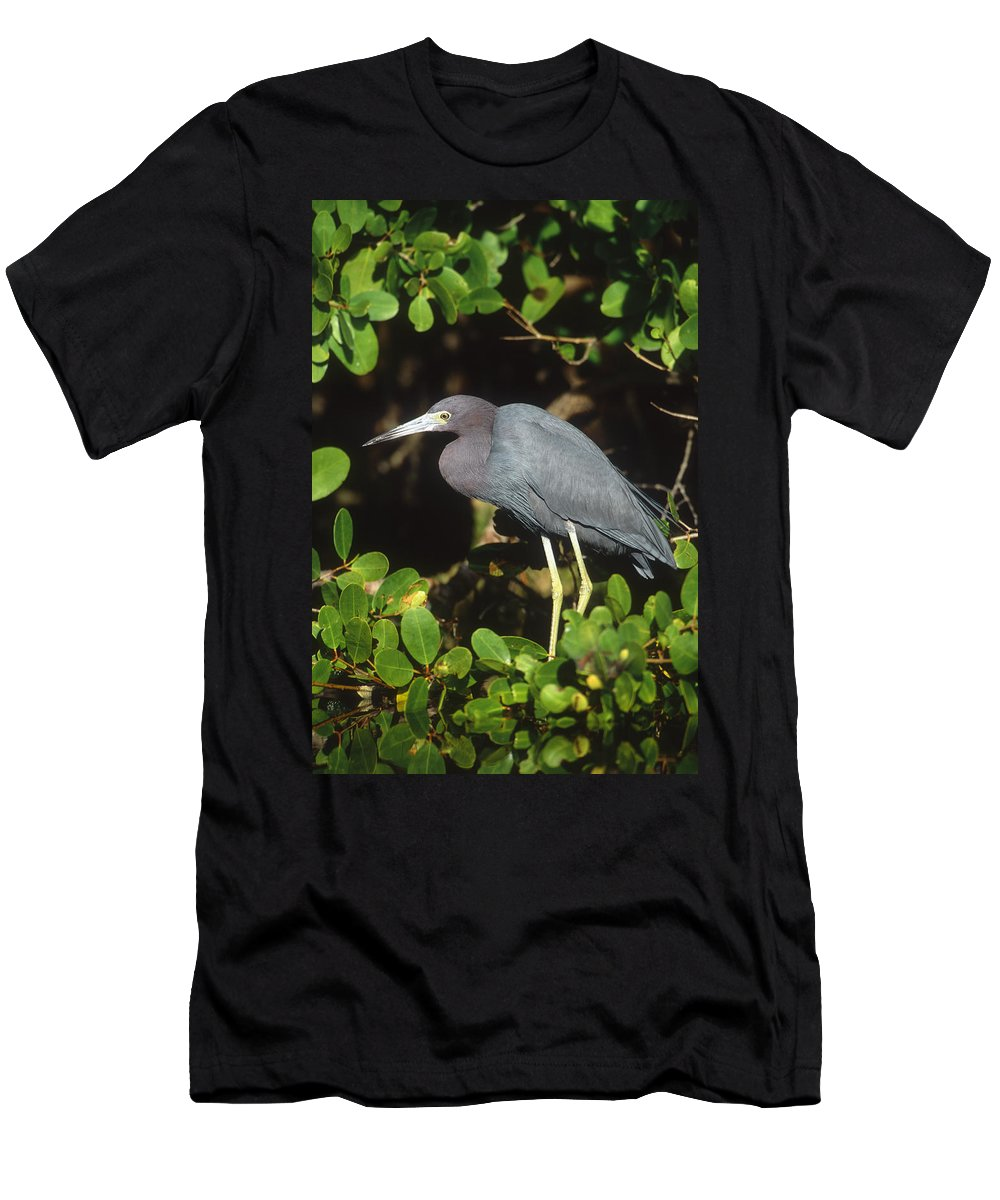 Feb0514 Men's T-Shirt (Athletic Fit) featuring the photograph Little Blue Heron Florida by Tom Vezo