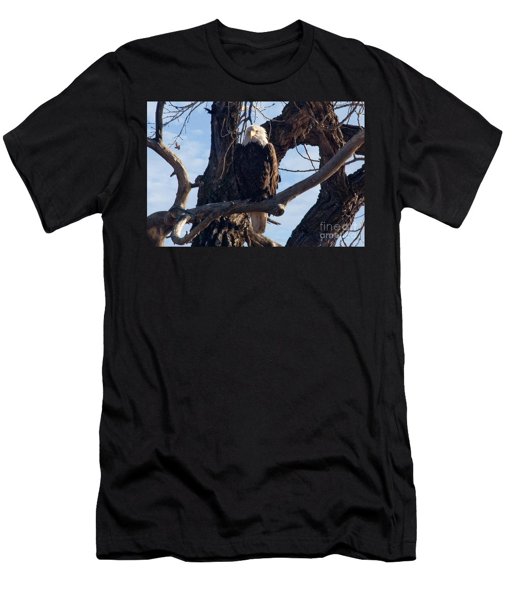 Colorado Men's T-Shirt (Athletic Fit) featuring the photograph Lone Eagle by Bob Hislop