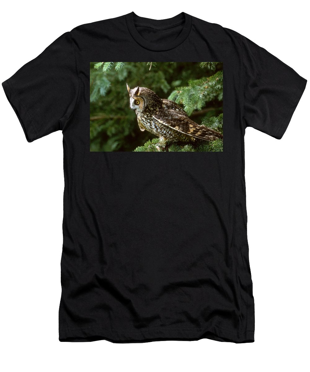 Owl Men's T-Shirt (Athletic Fit) featuring the photograph Long-eared Owl by Larry Allan