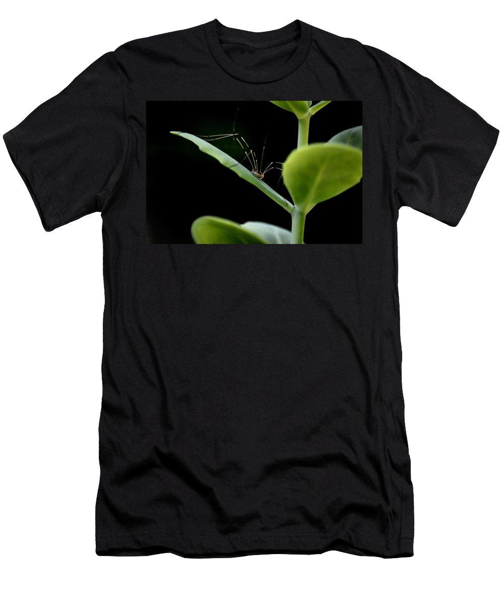 Long Legged Creeper Men's T-Shirt (Athletic Fit) featuring the photograph Long Legged Creeper by Maria Urso