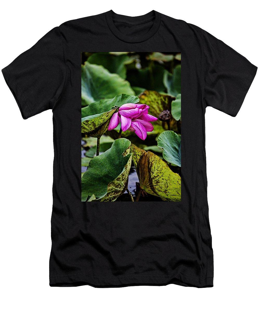 Lotus Flower Men's T-Shirt (Athletic Fit) featuring the photograph Lotus Flower- Gungarre Billabong by Douglas Barnard