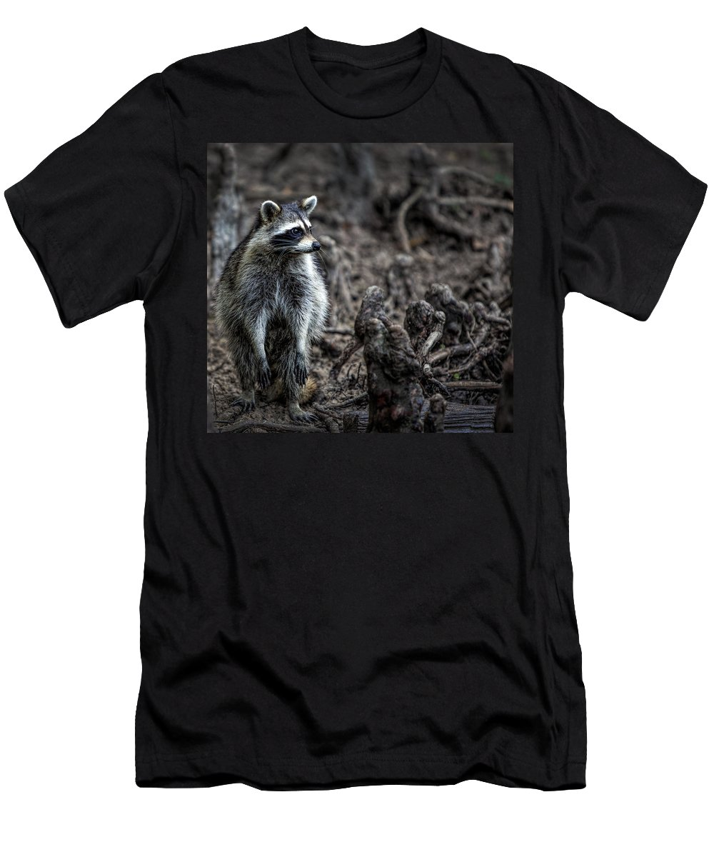 Raccoon Men's T-Shirt (Athletic Fit) featuring the photograph Louisiana Raccoon by Diana Powell