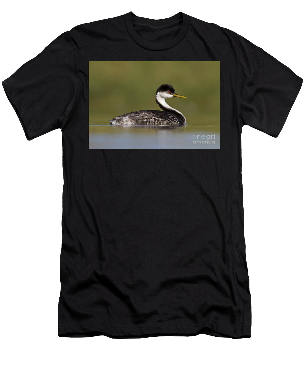 Western Grebe Men's T-Shirt (Athletic Fit) featuring the photograph Low Angle Western Grebe by Bryan Keil