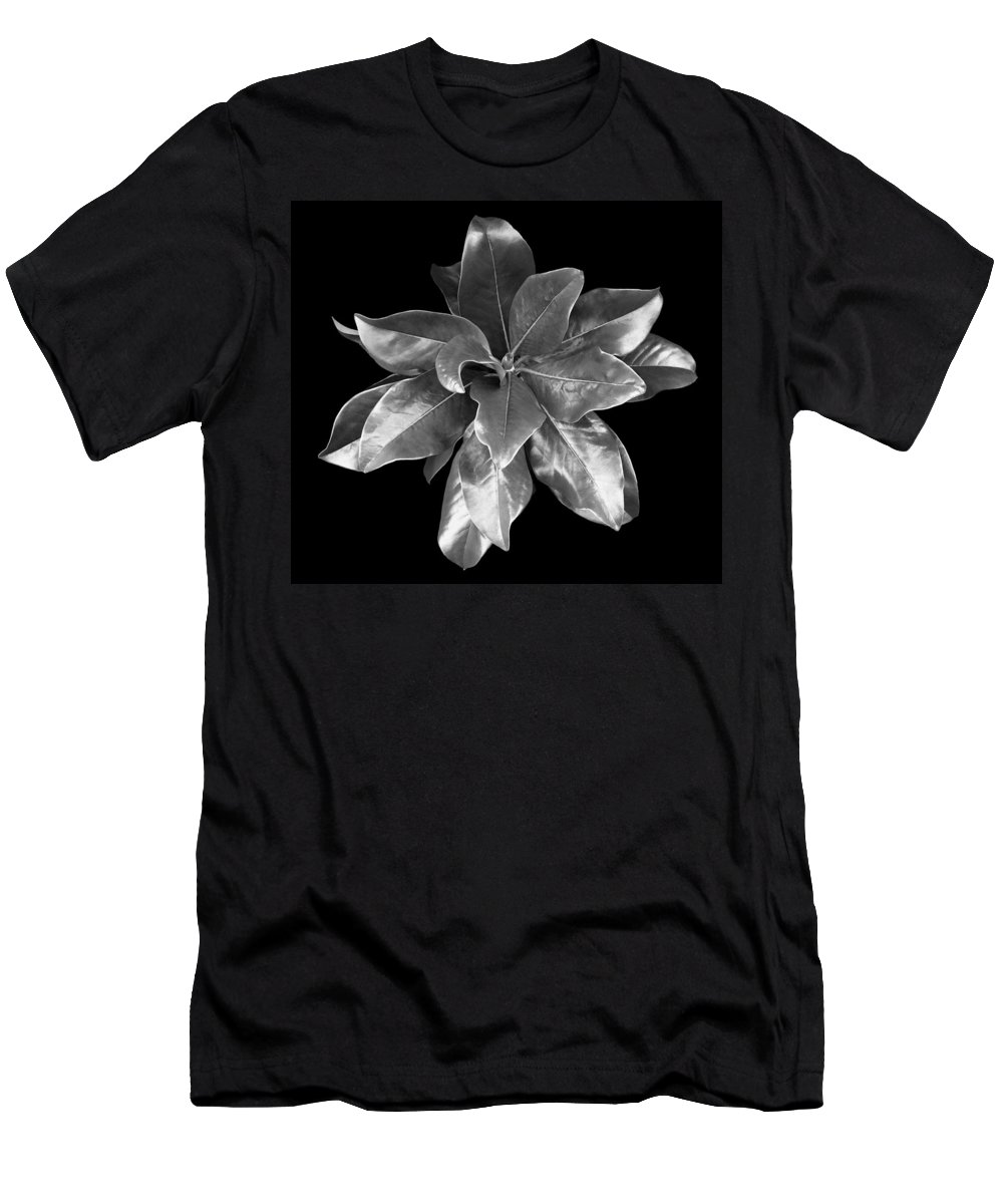 Magnolia T-Shirt featuring the photograph Magnolia Tree Leaves by Marilyn Hunt