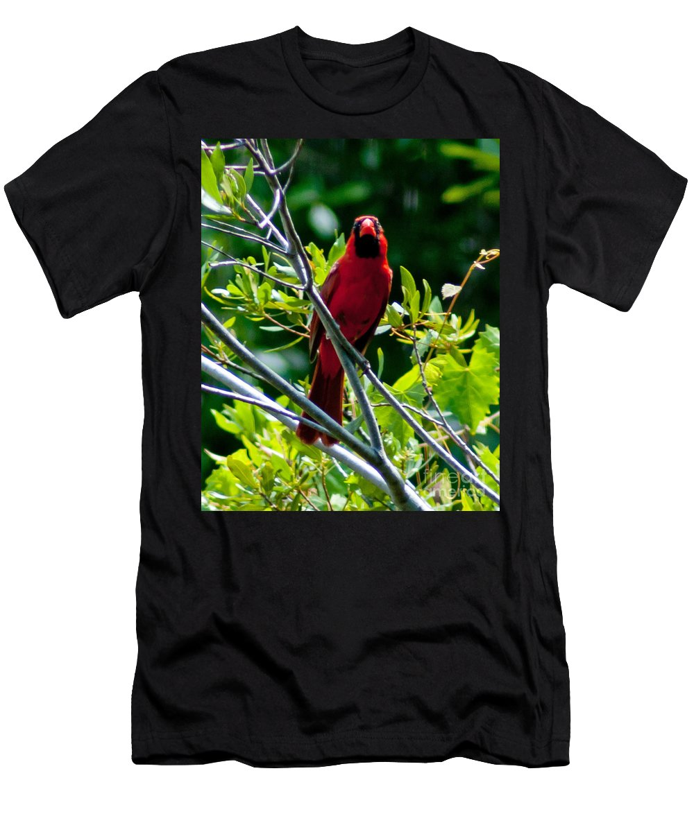 Red Men's T-Shirt (Athletic Fit) featuring the photograph Male Cardinal by Stephen Whalen