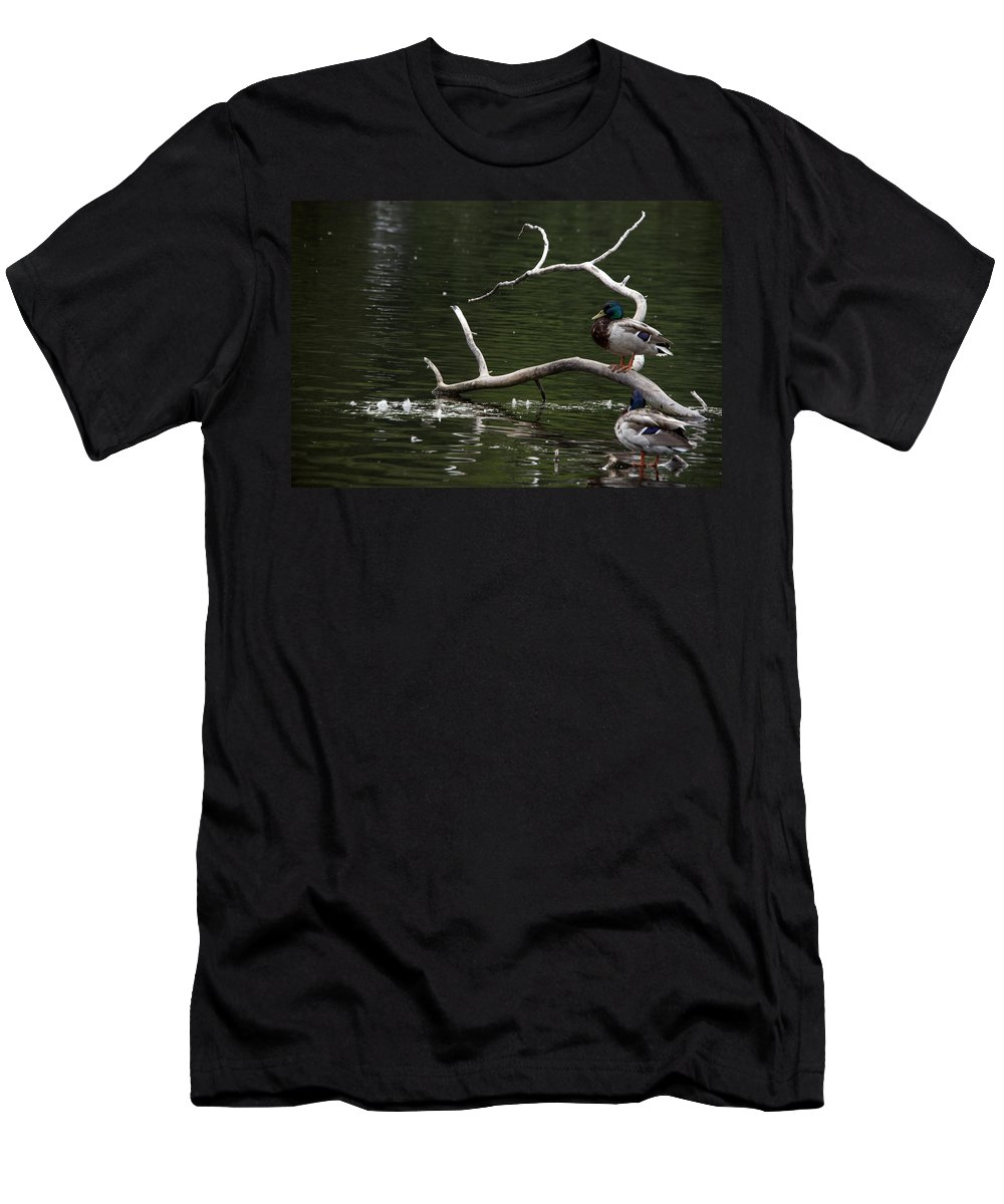 Mallard Men's T-Shirt (Athletic Fit) featuring the photograph Mallard Standing Post by Jayne Gohr