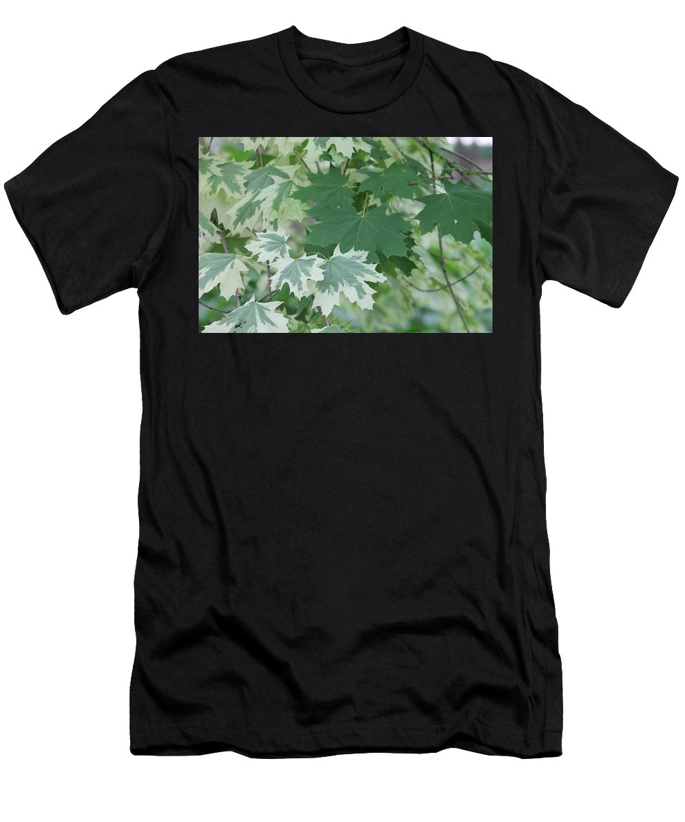 Trees Men's T-Shirt (Athletic Fit) featuring the photograph Maple Leaves Same Tree by Wayne Williams